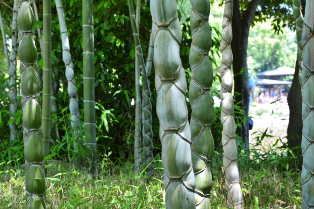 Speciality bamboo